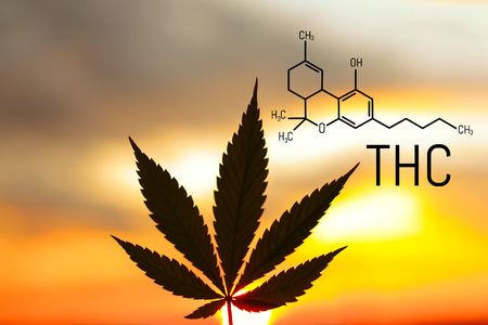 Medical chemical formula hemp THC. Molecular structure marijuana tetrahydrocannabinol. Medical cannabis is used in Ayurveda