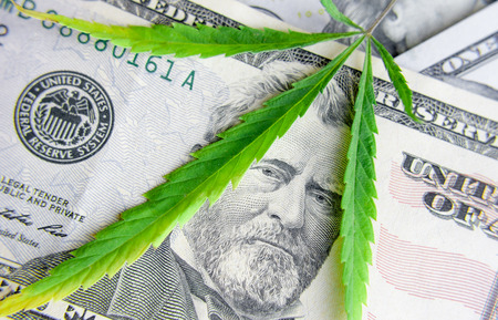 US dollar bills over the green cannabis leaves. Money and marijuana. Concept of business, medicine and selling hemp, drugs. Increase revenue and profits in the field of growing medical cannabis Stock Photo