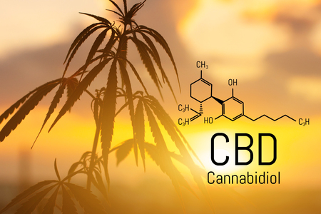 CBD is in hemp extract. Cannabidiol Formula. Concept of use in the form of gels, oils, extracts, additives and other