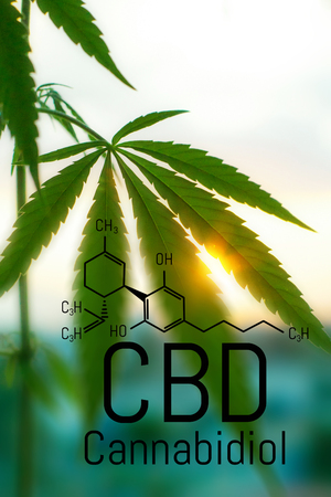Cannabis concept as a universal remedy, pharmaceutical CBD oil. Concept of using marijuana for medicinal purposes. Hemp organic medicine product. natural herb essential from nature 스톡 콘텐츠