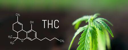 Cannabis leaf marijuana, THC Chemical formula, beautiful background, concept for legalizing the cultivation of marijuana for medical use