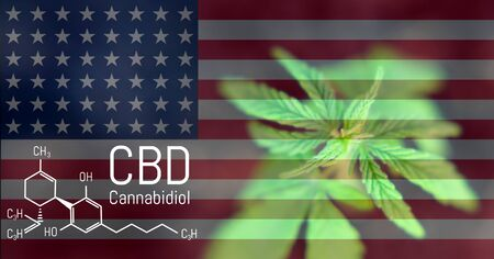 Marijuana cannabis leaf on the US flag, CBD Chemical Formula, a beautiful background, the concept of legalizing the cultivation of marijuana use in medical recreational