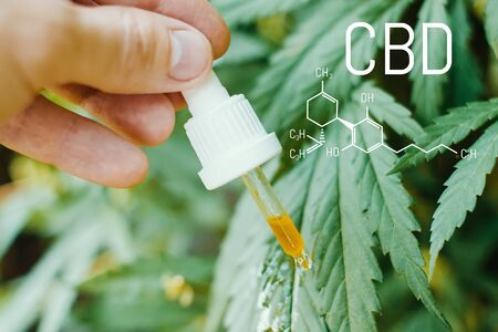 Concept of production of high quality natural marijuana CBD oil. CBD formula for cannabis. Pipette with hemp oil in marijuana leaves