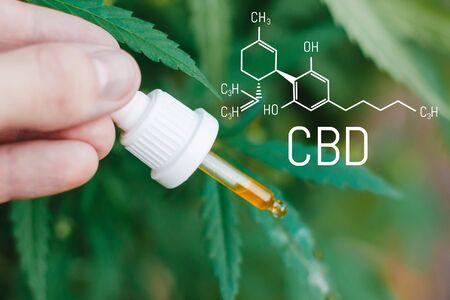 Concept of using marijuana for medicinal purposes. Cannabis of the formula CBD cannabidiol. Pipette with hemp oil in marijuana leaves