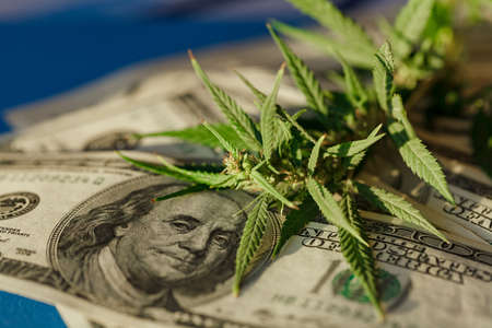 Benjamin Franklin on the hundred dollar banknote among cannabis leaf. Money with marijuana leaves. Marijuana business concept. Business leaves cannabis stock success market price