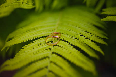 Two gold wedding rings lie on a green fern leaf. Wedding rings on a background of greenery and fern leaves. Copy space, top view, flat lay. Rustic composition. Botanical chic. Photo series