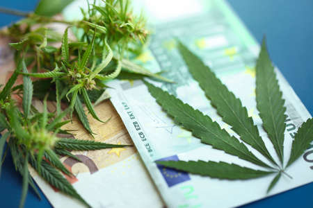 Euro bills with a marijuana with copy space. Concept of buy or sell cannabis or drug trafficking. Euro cash and hemp or cannabis