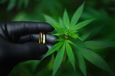 Cannabis CBD pill in hand with black glove, clear cannabidiol and green hemp leaf capsule, hemp CBD oil capsule