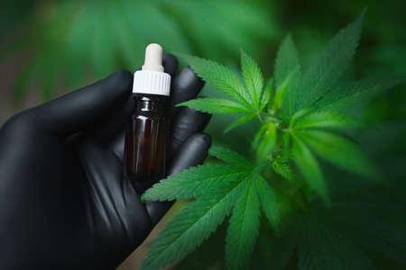 Black gloved hand holds a cannabis bottle with CBD oil next to a green hemp bush. Medicinal Cannabis Oil with CBD 免版税图像