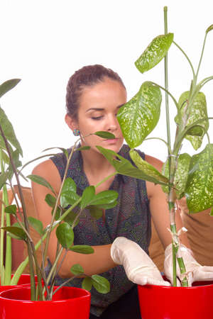 woman planting houseplants with gloves on white background
