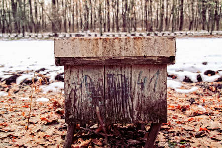 wooden beehive on yellow leaves in winter forest photo