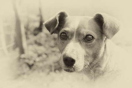 sad street dog with cute adorable eyes outside photo