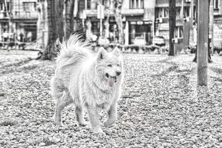 happy samoyed dog in park, abstract style photo