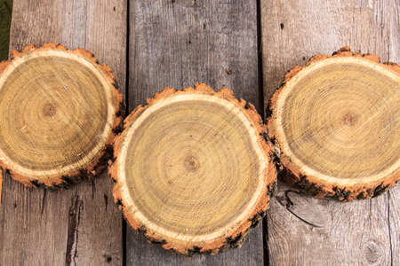 Cross section of tree trunks showing growth rings on wooden  photo