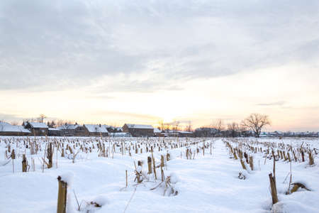 winter's tale: Winters Tale. Winter landscape with snowy countryside village next to cornfield covered in white snow cover at sunset or sunrise. Rural village home in winter time.