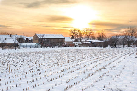 winter's tale: Winters Tale. Winter landscape with snowy countryside village next to cornfield covered in white snow cover at sunset or sunrise. Rural home in winter time.