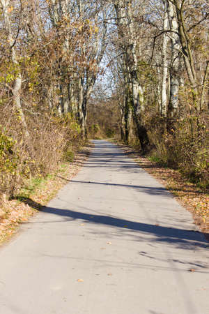 fall protection: Walking Path in Forest in Autumn. Trees and Road Which Lies in an Forest During the Fall Season. Fall Leaves Adorn a Country Road. Environment Protection. Stock Photo