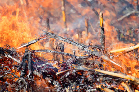 fire hazard: Fire in the Cornfield After Harvest. Fire on Dry Corn Field Close Up with Lots of Smoke. Fire Hazard and Consequences.