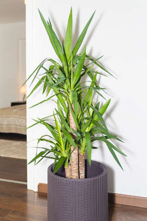 the next life: Green Grass Plant in Vintage Pot Decorating Against White Bright Wall Next to Door. Potted Green Plant Placed in Home Living Room. Tree of Life in Knitted Pot Decorating the Corner of an Empty Room. Stock Photo