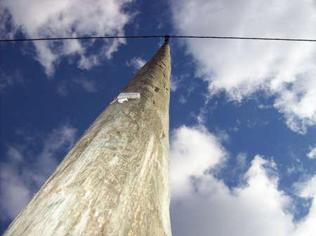 albero: cielo