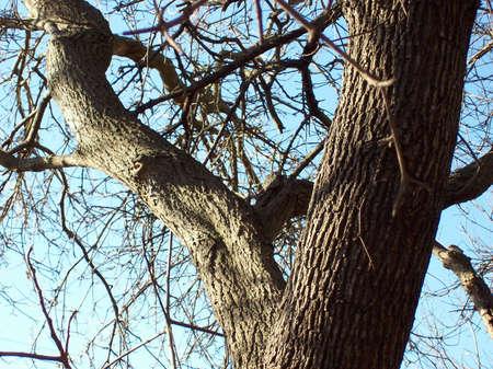 albero: albero