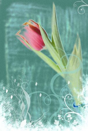 grungy tulip background Stock Photo - 2496676
