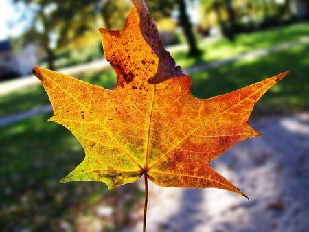 rott: hojas de oto�o