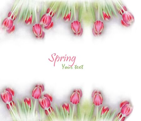 pink tulips in a frame perfect for your text photo