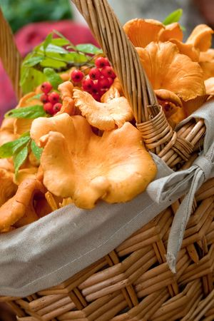 Lovely autumn produce basket with chanterelle mushrooms and cranberries