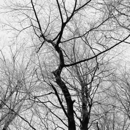 Branches of a tree covered in winter frost.  photo