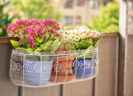 Plantpots でいっぱいのバルコニーの花ボックスの画像 写真素材