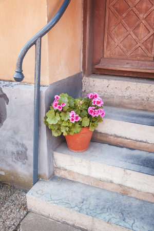 Image of a potted plant at the front of a house   photo