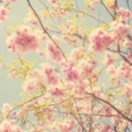Image of out of focus spring background.