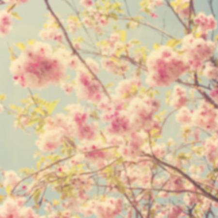 primavera: Imagen de fondo fuera de foco primavera.