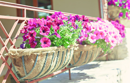 balcony window: Image of a balcony flower box.
