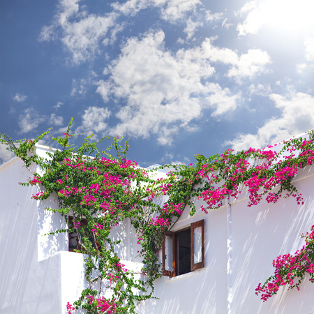 white washed: Image of a white washed house with bouganevillea clining to the outside. Santorini Greece. Stock Photo