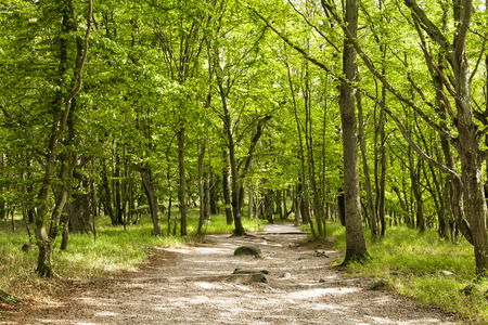 south east: Image of Stenshuvud nation park, south east Sweden.