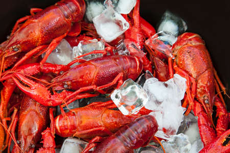 crab pots: Image of crayfish on ice.