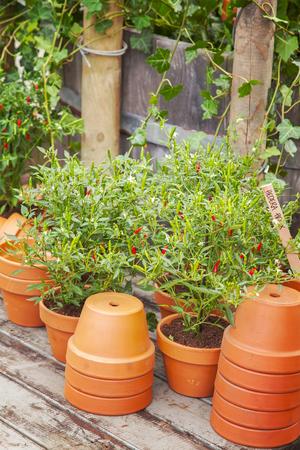 potting: Image of garden potting area.