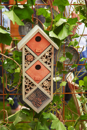 insect: Image of a nesting box for butterflies and other insects.