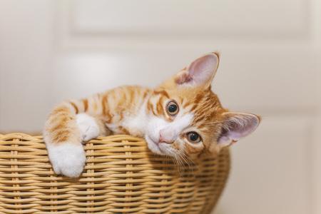 basket: Image of cute ginger kitten in wicker basket.