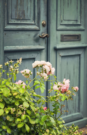 Imagen de un viejo puerta verde y rosal. Foto de archivo