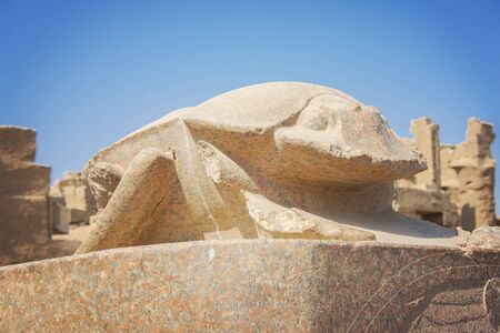 scarab: Image of a scarab statue at temple of Karnak in Luxor, Egypt.
