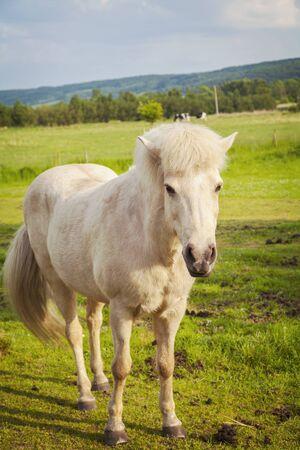 Image of white pony in farm paddock.