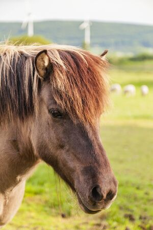 paddock: Image of brown pony in paddock. Stock Photo