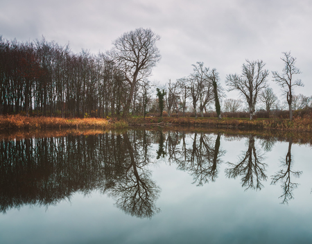 Tree reflections in lake at winter. Denmark.