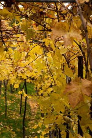 An image of autumn. The color of autumn. photo