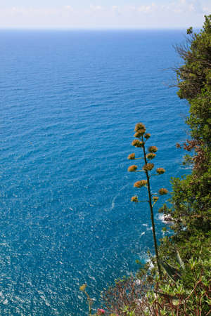 The national park Cinque Terre in Italy Stock Photo - 7986330