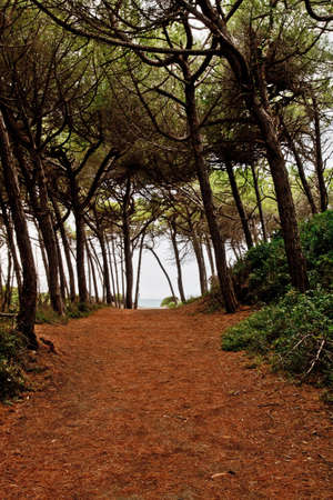 Forest path above Tuscany cost.