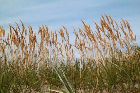 palate: cane in the sand by the sea